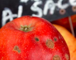 Je suis une pomme invendue sur le marché de la Marne